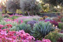 drought gardens