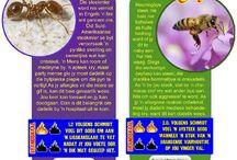 Diere / Animals / Cool taak- en klashulp oor diere en troeteldiere! Infografikas. Speelkaarte.