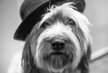 Animais / Aqui podes encontrar imagens de animais :)