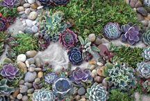 Sukkulenten im Garten