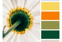 Color Palettes / color schemes taken from photos