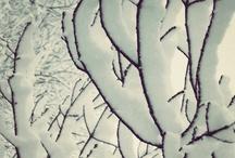 Cold Landscapes / Winter landscapes