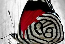 Black and Red Butterflies