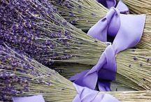 Lavender love / by Elaine Morin-Cameron