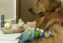 oiseaux +chiens