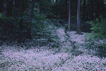 Nature / by Amie Beswick