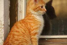 Chats Roux doux doux