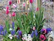 Flowers / Pot flowers