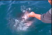 Foto's van haaien