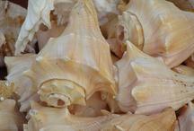 Beach shell crazy / by Terri Garcia