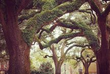 Location: Savannah, GA / Charming and historic...this is one of my most favorite cities. It's filled with so much to study, enjoy, look at...we took our time when we visited and soaked in as much as we could. I have plans to return for some writing and research and just some more pure enjoyment of this sweet Southern city. There are special things to do here and sweet moments to embrace. Enjoy! / by Linnaea Kimble