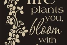 Garden motivation / Words of wisdom to help get through the seasons