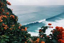 Sirene-Ocean
