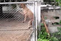 Fence Fail