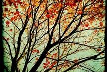 Autumn / by Patricia Proper