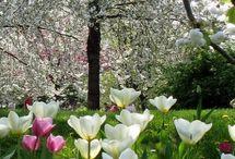 Jahreszeiten-Frühling / Impressionen zum Frühling
