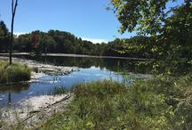 Family Camps in Albion, NY