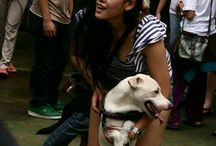 animal defenders indonesia / Rescue, rehab,rehome
