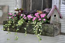 Window boxes / Garden art / by Macan Rosabal