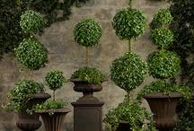Plants / Topiary ideas