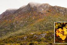 Tasmania ... Beautiful ... Magickal!
