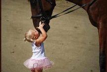 Konie zdjęcia