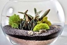 Sand Terrarium
