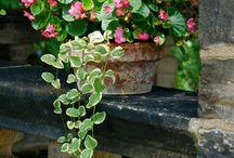 POTS & JARDINIÈRES / Pots, jardinières, balconnières, bouquets, fines herbes, terrariums, murs végétaux...