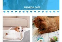 Best Pet Care Tips