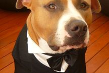 Tuxedo for my Pit