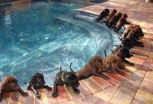 Dogs! / by Kristen Kean