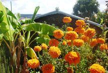 La Casa Aromatika / pequeño resort-rural situado en Rehouna,pequeña aldea,situada en el campo y frente al Atlantico a 10kms de Asilah,Maroc Tienes 3 habitaciones,2 baños,2 salones,cocina y un jardin aromatiko,tropical e impresionante A vuestra disposicion todo el año