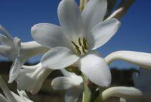 Grasse capitale des fleurs à Parfum