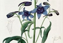Botanical Illustration / by Karen Stark