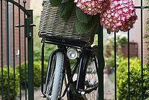 bikes-flower / flawers