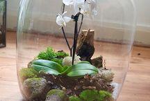 aquarium vegetal
