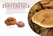Ganoderma Lucidum / The Benefits of Magic Mushrooms