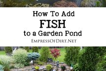 Build goldfish pond