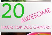 Doggy tips