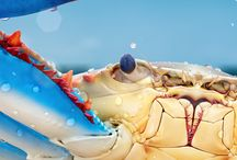 Crustacean / by Bonnie Koenig