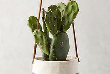 love ::: plants + flowers