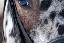 koně a vlasy a účesy