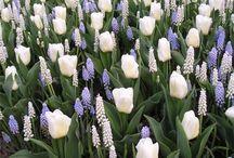 Blomsterløk