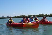 Kayak Tours Naples Florida