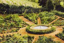 Kitchen garden dreams