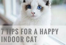 Cats And Critters / Pictures of beautiful cats and kittens