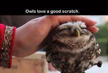 Only birds