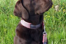 """Fotos von Kunden / Unsere canvasco URBAN DOGS Kunden senden uns oft Bilder von ihren Vierbeinern zu. Ein Hund auf dem Kissen """"Louis"""" oder mit Halsband am See. Perfekte Momente!"""