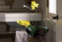 Accessorizing - Orchids