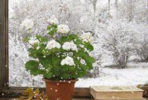 Tél-winter..